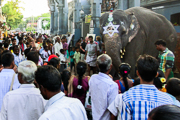 pondy elephant (1 of 1)